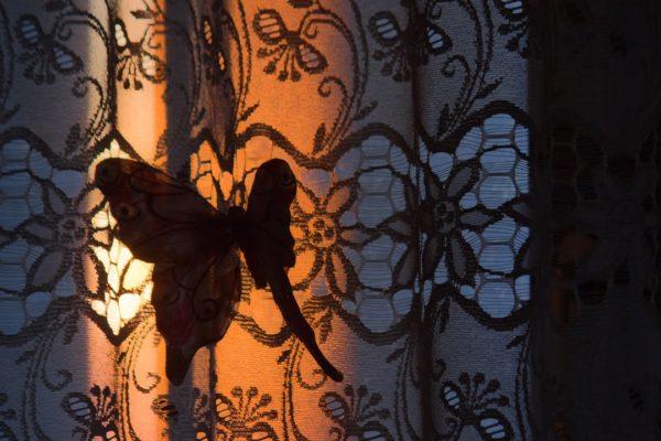 IMG_2819 motyl na słonecznej firance