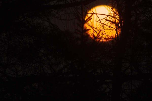 IMG_4094 wschodzące słońce łowyń 01.02.2019