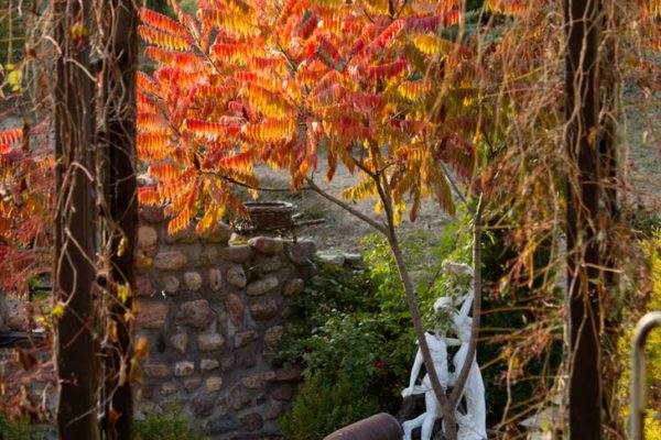 IMG_5867 jesienny ogród